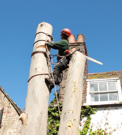Tree Surgery in London