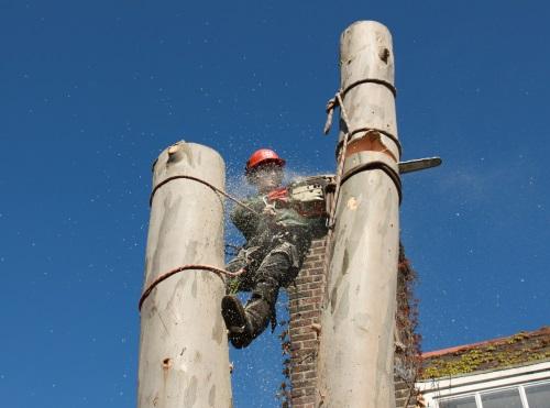 How we dismantle trees