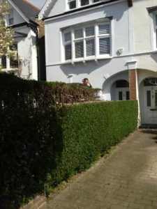 Hedge Trimming London