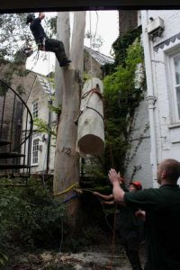 tree-felling-london