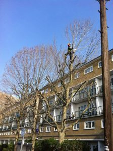 tree-pruning-london