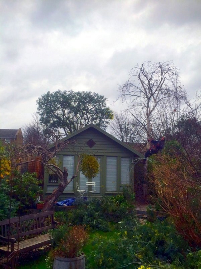 Tree Surgery for Landlords