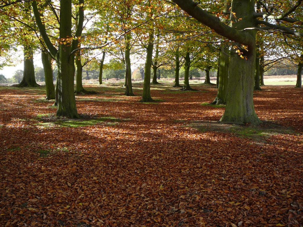 Richmond Park Trees