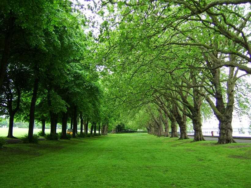 Wandsworth green spaces graftingardeners for Garden trees london