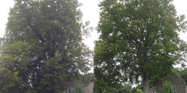Tree Crown Cleaning / Deadwooding
