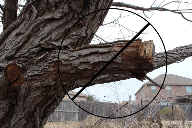 Incorrect Pruning