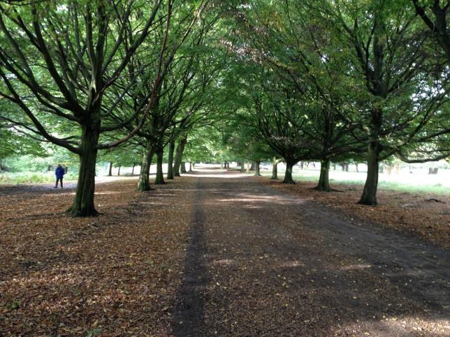 richmond-park-octobertrees