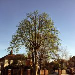 Tree Pruning: Various Methods Used to Prune a Tree