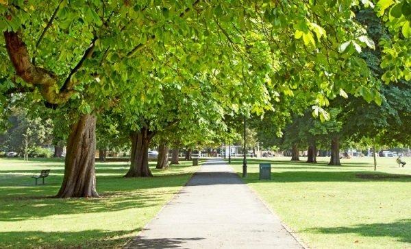 Ealing's Trees