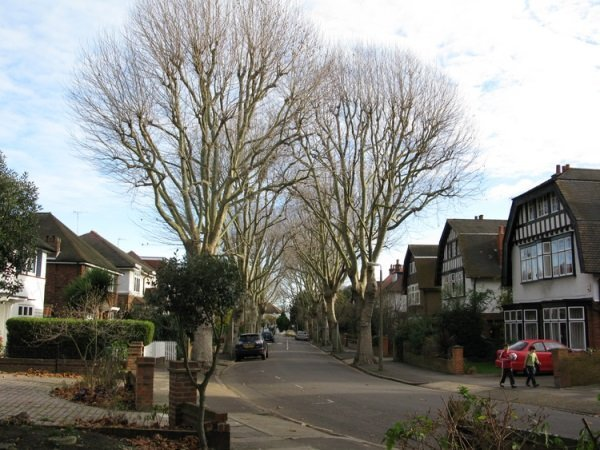 Twickenham Trees