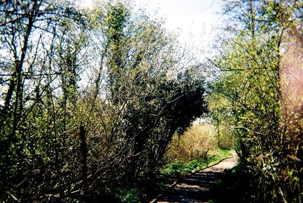 Ealing's Woodlands
