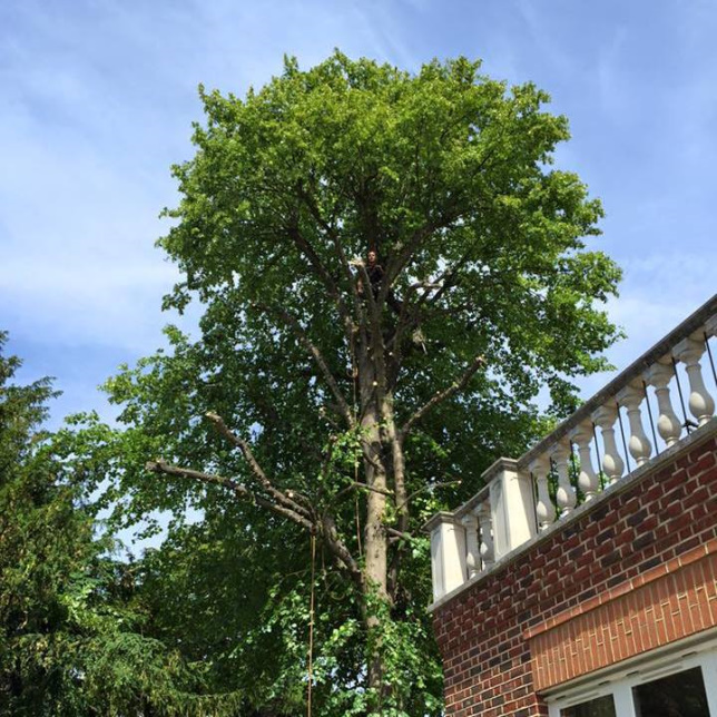 Tree Surgery for Homeowners