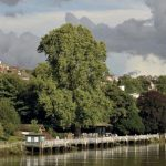 The Greatest Trees in London