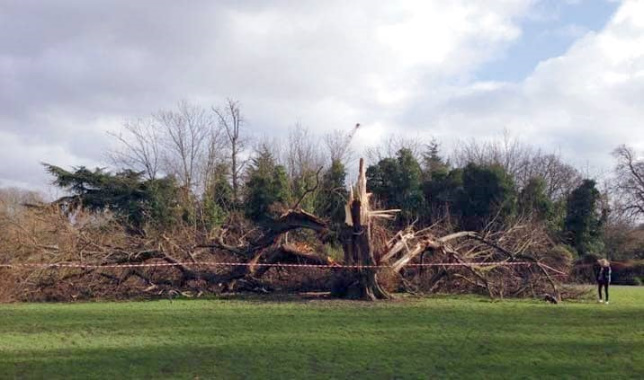 Fallen-Tree-Ravenscourt-Park