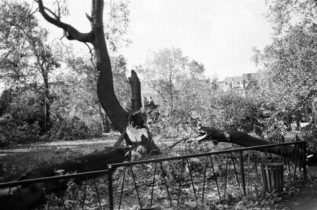 Great-Storm-of-1987-Fallen-Trees