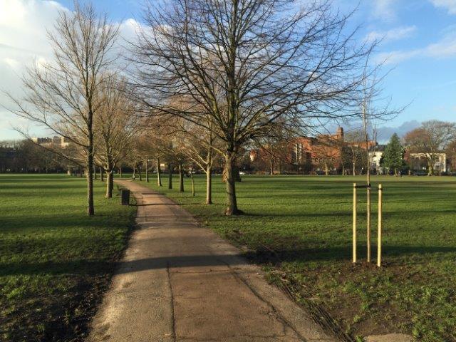 Tree-Planting-Ravenscourt-Park