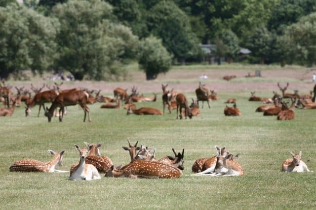 Wildlife in Richmond Park