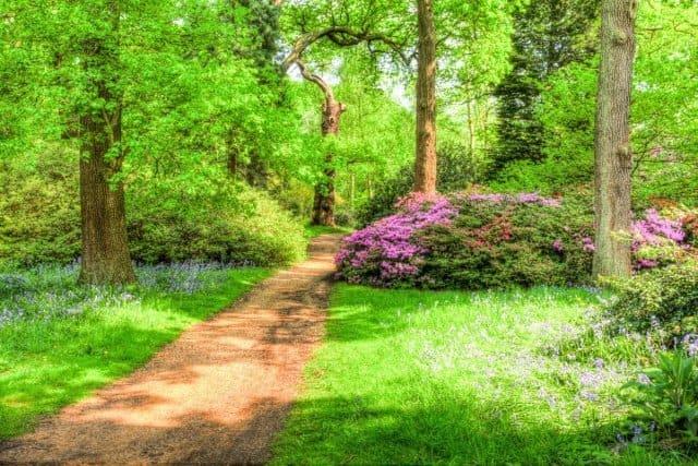 3 Isabella Plantation in full bloom