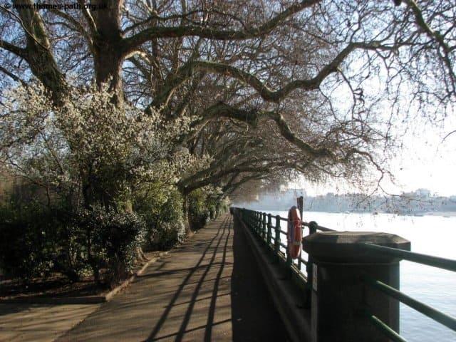 Bishops Park Fulham Riverside