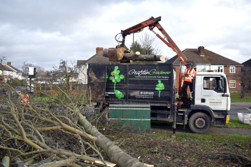 Commercial Tree Services Service