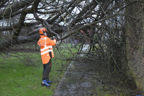 Emergency Tree Service in London