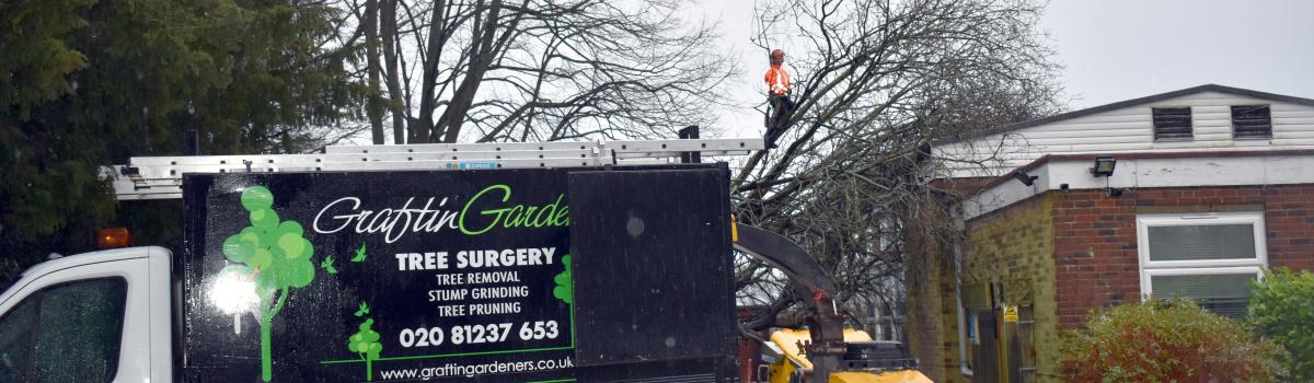 Emergency Tree Work London Header
