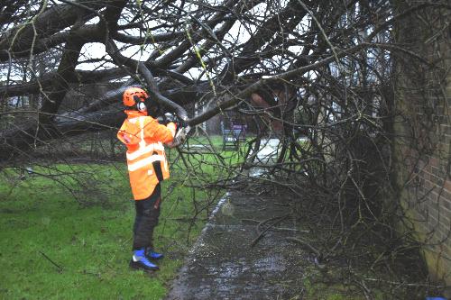 Emergency Tree Work Service