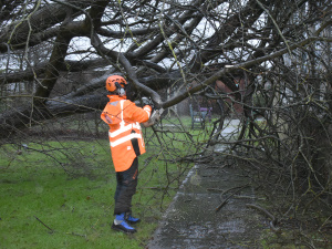 Emergency Tree Work in Oval