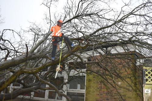 Emergency Tree Work in London