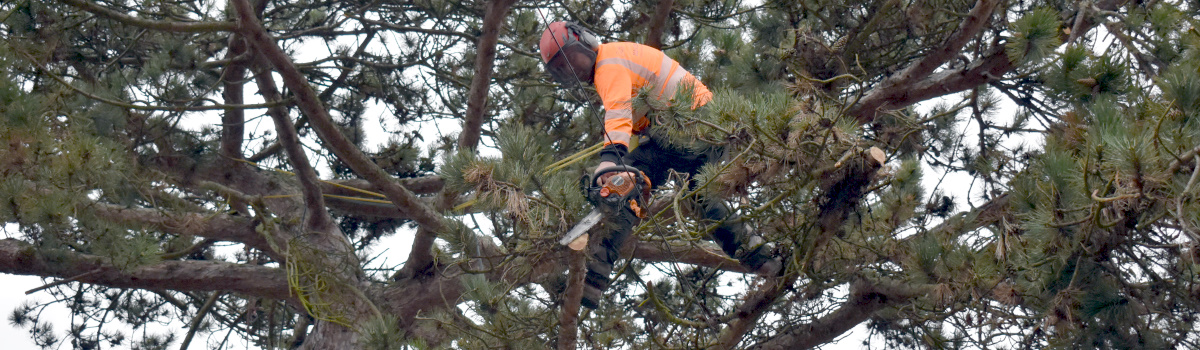 Insured & Qualified Tree Surgeons Header