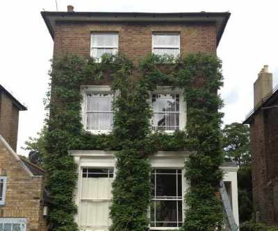 Ivy Pruning in London 2