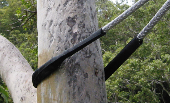 Tree Cable Bracing Service