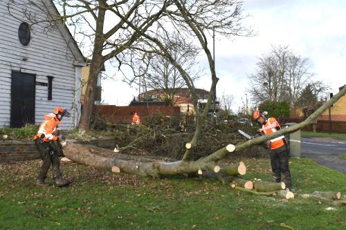 Tree Felling Home Service