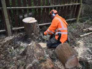 Tree Felling in Raynes Park