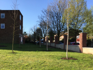 Tree Planting in Crystal Palace