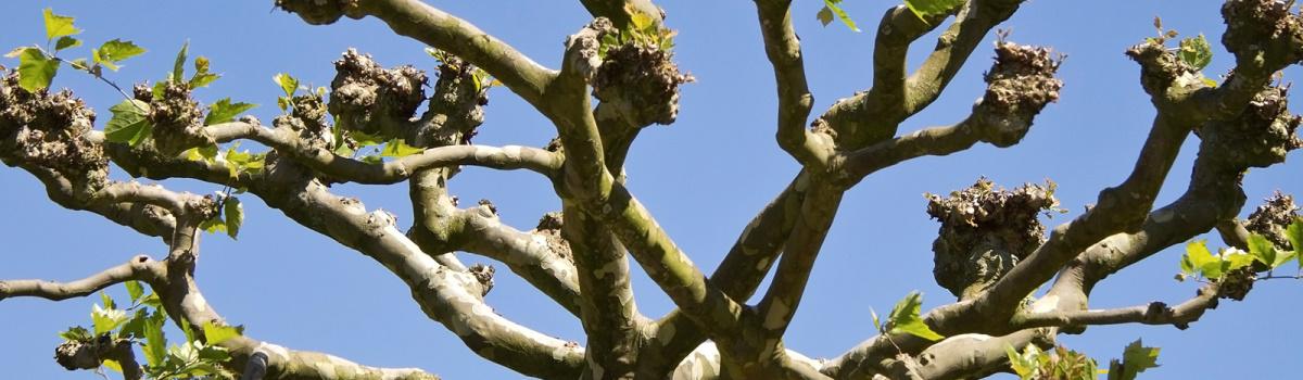 Tree Pollarding London Header