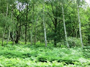 Tree Species in Wimbledon