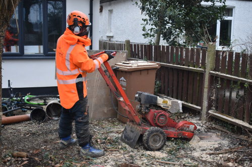 Tree Stump Grinding & Removal London