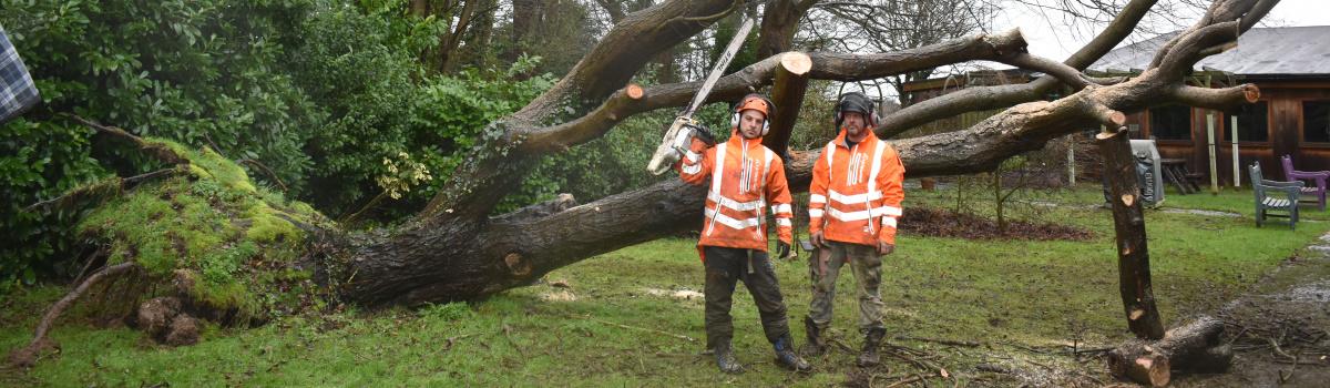 Tree Surgery London Header