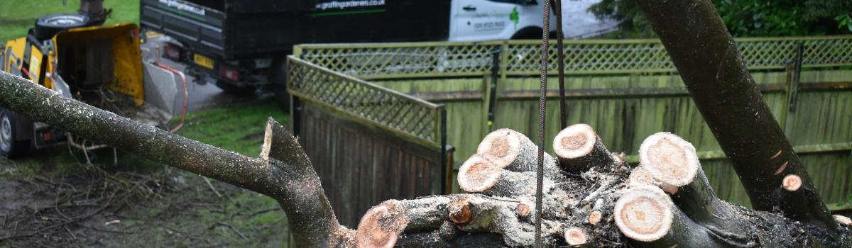 Tree Surgery Testimonials Header