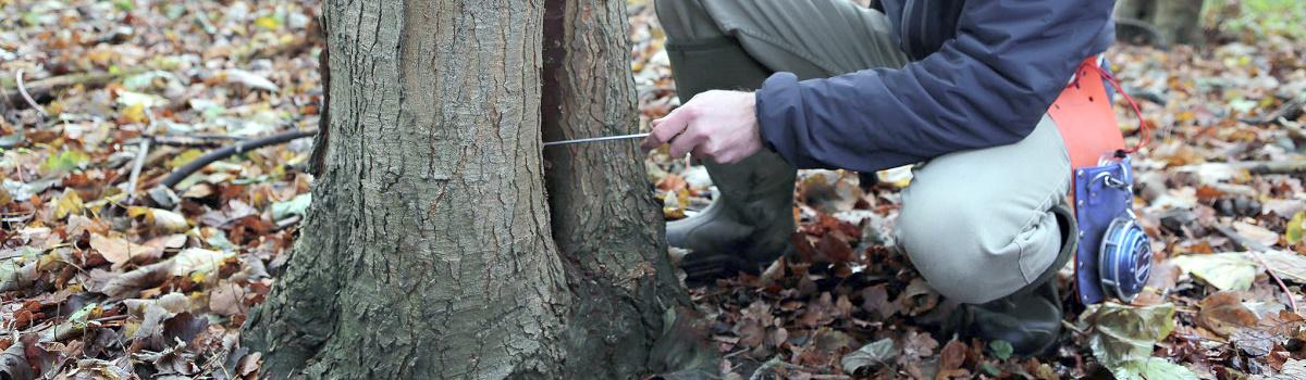 Tree Surveys London Header