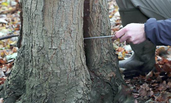 Tree Surveys Service