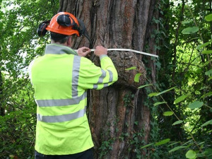 Tree Surveys in Westminster
