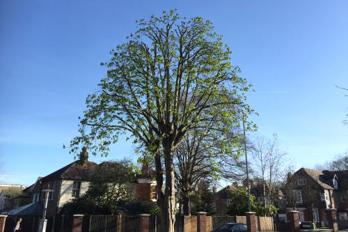 Tree Trimming London