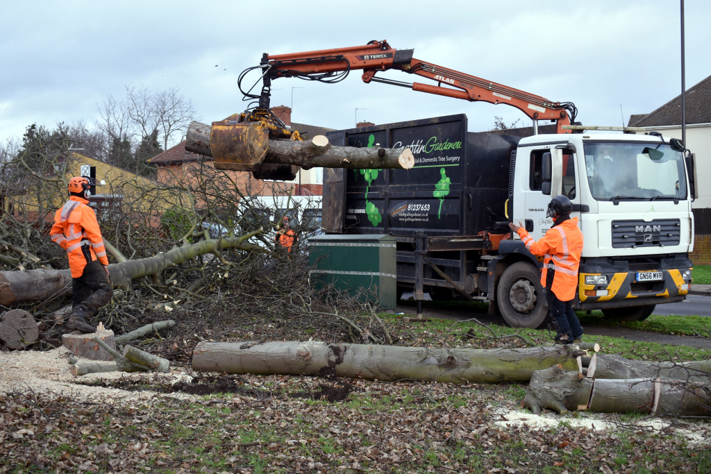 Commercial Tree Services Blog 4