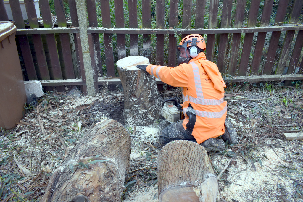 Tree Felling Blog 2
