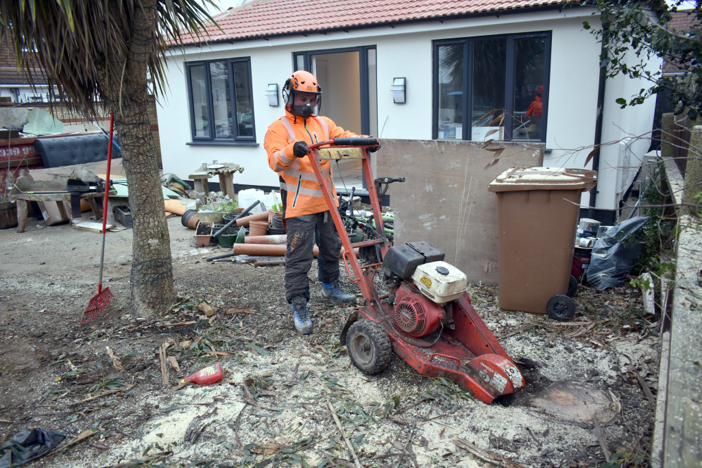 Tree Stump Removal Blog 1