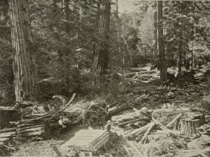 The Complete History of Tree Surgery and Arboriculture