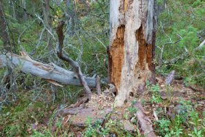 Killing Your Trees: 6 Things You Don't Even Realize You're Doing to Kill Your Trees