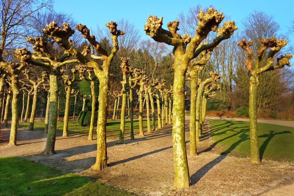 Tree Pollarding 101